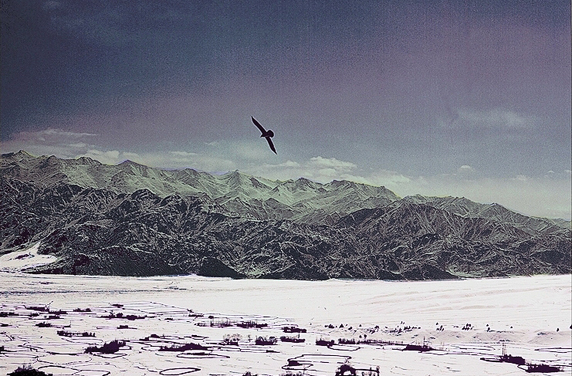 Bird & Mountains